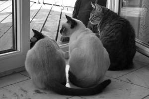 3_koty w drzwiach balkonu