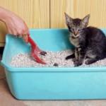 kot w brudnej kuwecie
