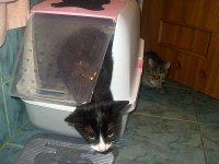 kot w kuwecie zakrytej