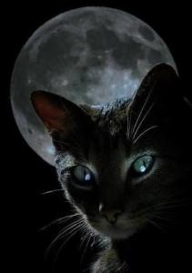 kot i księżyc
