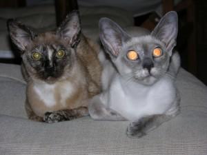 kocie siostry